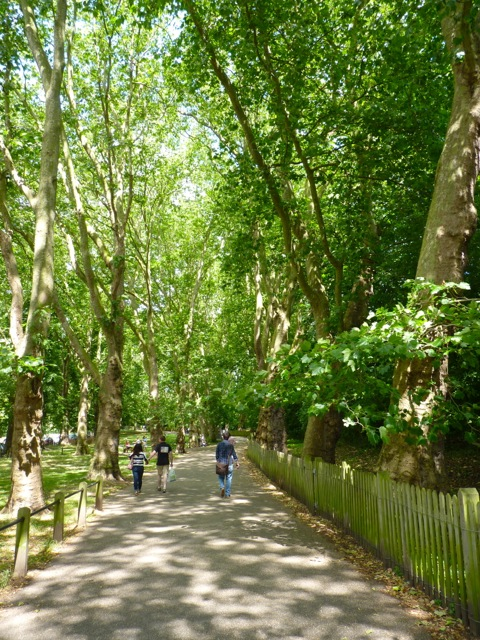 Plane Trees in Hampstead Heath